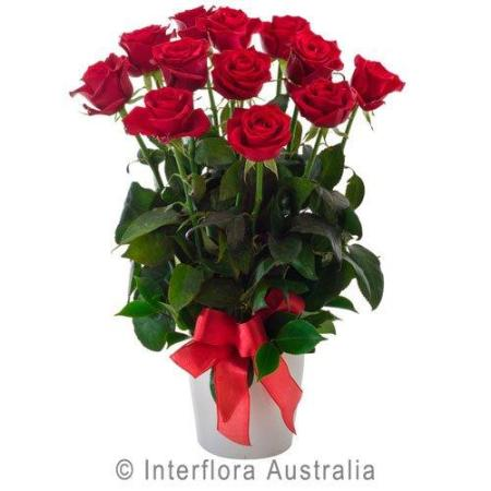 Luscious-12 Medium Stemmed Roses